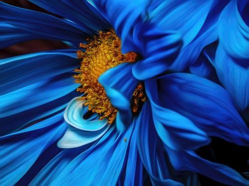 Petal bleue